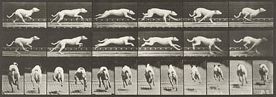 Galloping  Print by Celestial Images