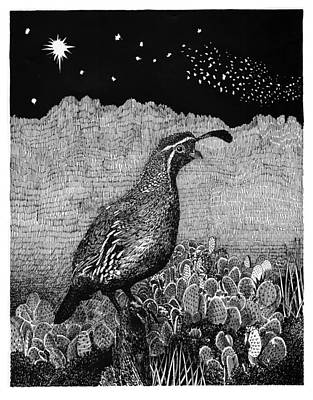Texas A Drawing - Gamblel's Quail Lucy In The Sky by Jack Pumphrey