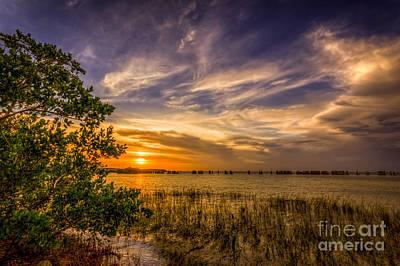 Seagrass Photograph - Gandy Lagoon by Marvin Spates