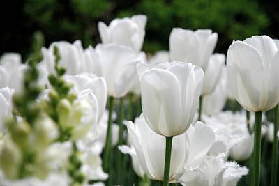 Lovely Photograph - Garden Beauty by Jennifer Ancker