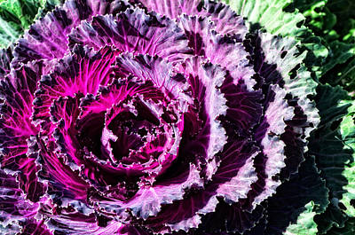Kitchen Art Photograph - Garden Haze - Purple Kale Art By Sharon Cummings by Sharon Cummings