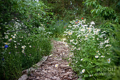 Horizontal Photograph - Garden Path by Cindy Singleton