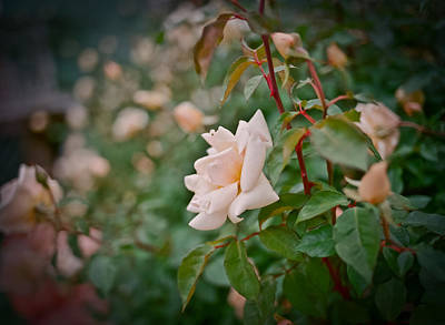 Medium Format Film Digital Art - Garden Pride by Linda Unger