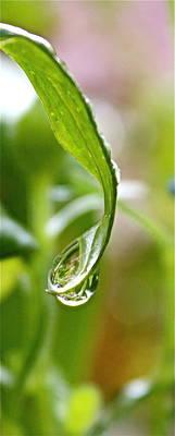 Garden Reflections 3 Print by Kume Bryant