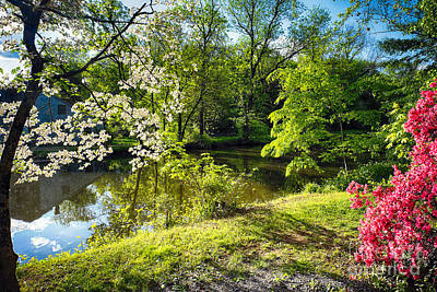 Cornus Photograph - Garden State Spring At The Canal by George Oze