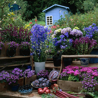 Outdoor Still Life Photograph - Garden Still-life by Hans Reinhard