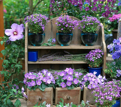 Outdoor Still Life Photograph - Garden Still-life With Purple Flowers by Hans Reinhard