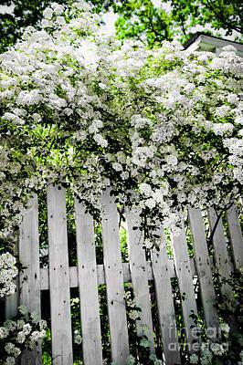 Garden With White Fence Print by Elena Elisseeva