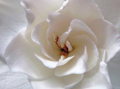Gardenia 7 Print by Mary Bedy