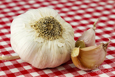 Garlic Print by Blink Images