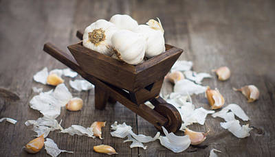 Grocery Photograph - Garlic Cloves In A Miniature Wheelbarrow by Aged Pixel