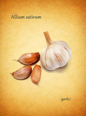 Fruit Photograph - Garlic by Mark Rogan