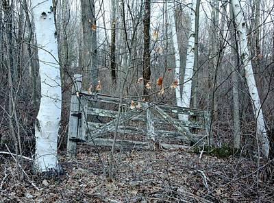 Gate And Birches Print by Randi Shenkman