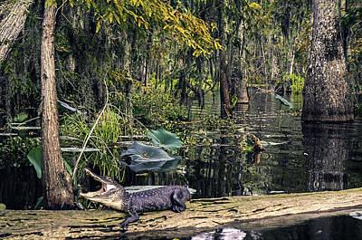 Aligator Photograph - Gate Keeper by Janet Fikar
