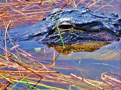 Gator Eye Print by Chuck  Hicks