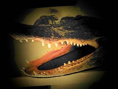 Aligator Photograph - Gator by Michael L Kimble