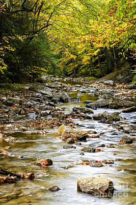 West Fork Photograph - Gauley River Headwaters by Thomas R Fletcher