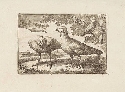 Cockatoo Drawing - Geese And A Cockatoo, Francis Barlow, Pieter Schenk by Francis Barlow And Pieter Schenk (i)