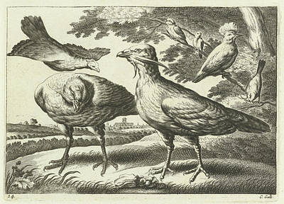 Cockatoo Drawing - Geese And A Cockatoo, Pieter Van Lisebetten by Pieter Van Lisebetten And Wenceslaus Hollar And Francis Barlow