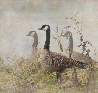 Geese Print by Angie Vogel
