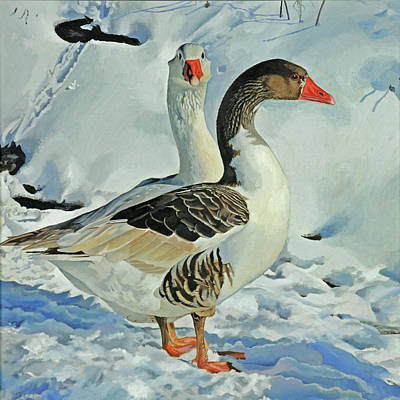 Snow Geese Painting - Geese In Snow by Graham Clark