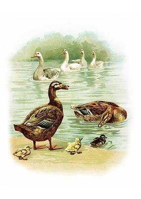 Geese Print by Munir Alawi