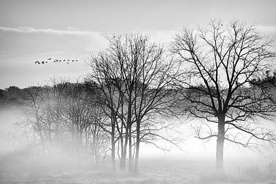 Geese On A Misty Morning  Print by Marcia Colelli