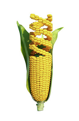 Modified Photograph - Genetically Modified Corn by Andrzej Wojcicki