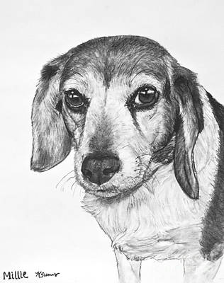 Old Friends Drawing - Gentle Beagle by Kate Sumners