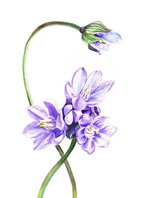 Gentle Purple Flowers Print by Irina Sztukowski