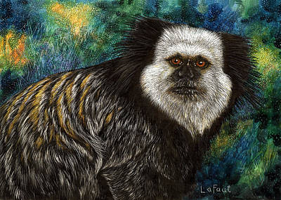 Rainforest Drawing - Geoffrey's Marmoset by Sandra LaFaut