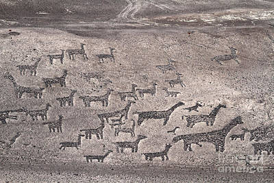 Llama Photograph - Geoglyphs At Tiliviche Chile by James Brunker