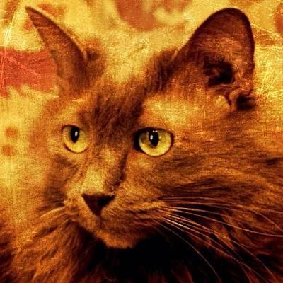 Cats Photograph - George by Jill Battaglia