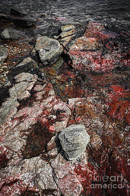 Georgian Bay Rocks Abstract II Print by Elena Elisseeva