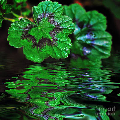 Geranium Leaves - Reflections On Pond Print by Kaye Menner