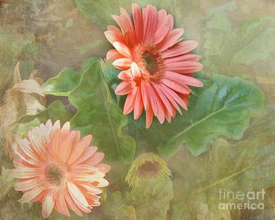 Gerber Daisy Beauty Print by TN Fairey