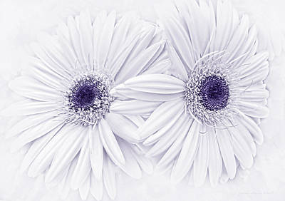 Gerber Daisy Photograph - Gerber Daisy Flowers In Lavender by Jennie Marie Schell