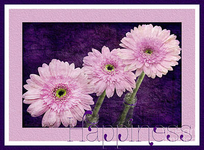 Flowers Photograph - Gerber Daisy Happiness 7 by Andee Design