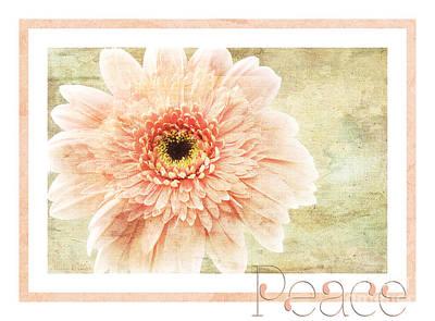 Gerber Daisy Photograph - Gerber Daisy Peace 1 by Andee Design
