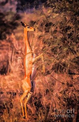 Animals Digital Art - Gerenuk Feeding by Liz Leyden