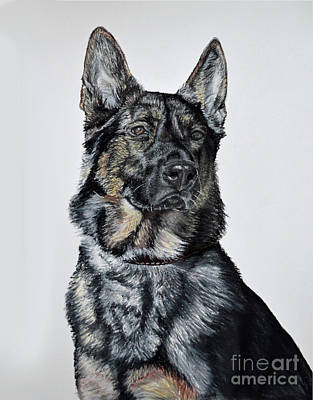 Dog Portrait Pastel - German Shepherd Bodhi by Ann Marie Chaffin