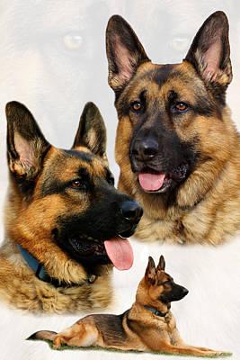 German Shepherd Dogs Photograph - German Shepherd Collage by Sandy Keeton