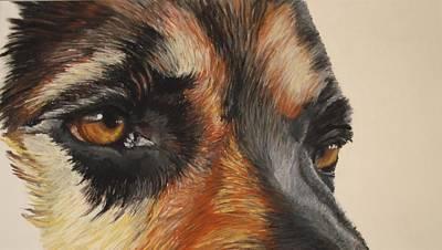 Dog Pastel - German Shepherd Gaze by Ann Marie Chaffin