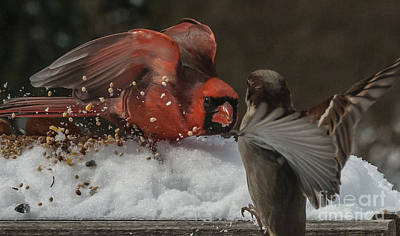 D700 Photograph - Get Off My Feeder by Jim Moore