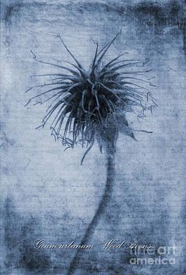 Ornamental Digital Art - Geum Urbanum Cyanotype by John Edwards