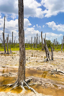 Mexicano Photograph - Ghost Forest Of The Yucatan by Mark E Tisdale