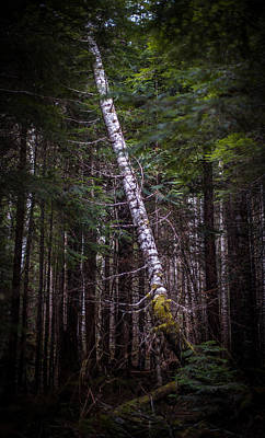Thoughtful Photograph - Ghost Tree by Mike Reid