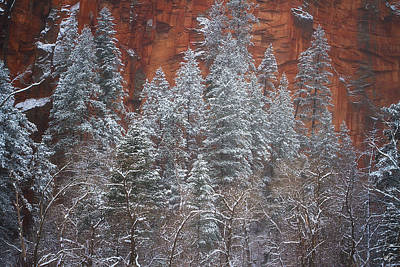 Ghosts Of Winter Print by Peter Coskun