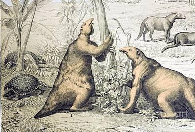 Giant Ground Sloth Megatherium, 1862 Print by Paul D. Stewart
