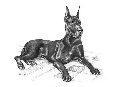 Great Drawing - Gibbs by Catherine Garneau